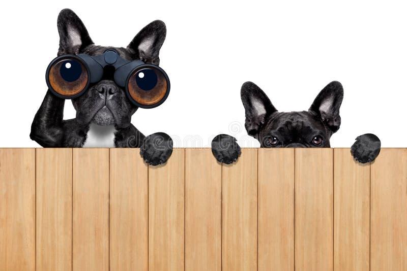两条香的狗 免版税库存照片