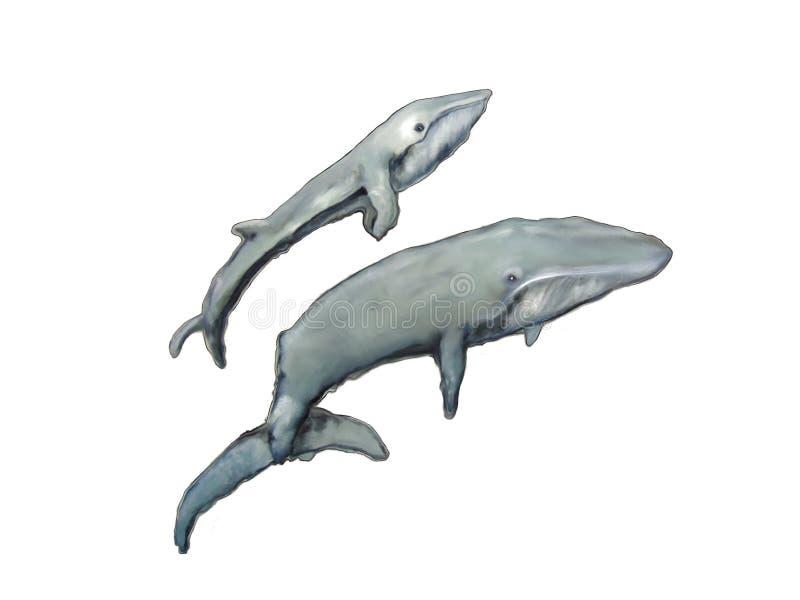 两条鲸鱼在海 向量例证