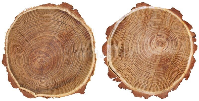 两根树干 库存图片