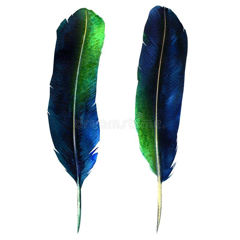 两根黑暗的羽毛,充满活力的羽毛集合,鸟飞行设计,在白色的被隔绝的,手拉的水彩例证 免版税库存照片