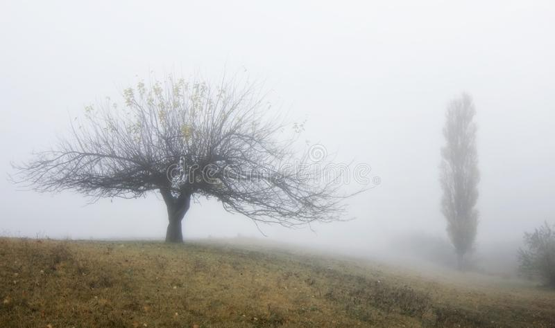 两棵树:宽和高 图库摄影