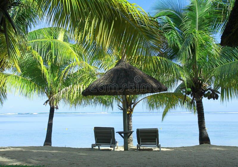 两棵sunbeds、伞和棕榈 库存图片