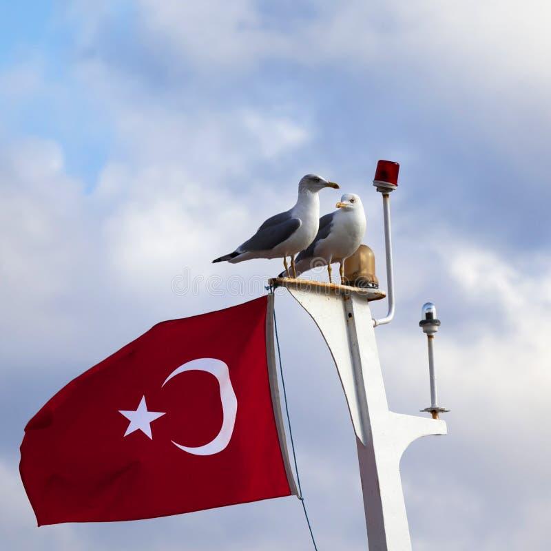 两海鸥和土耳其旗子在帆柱 库存图片