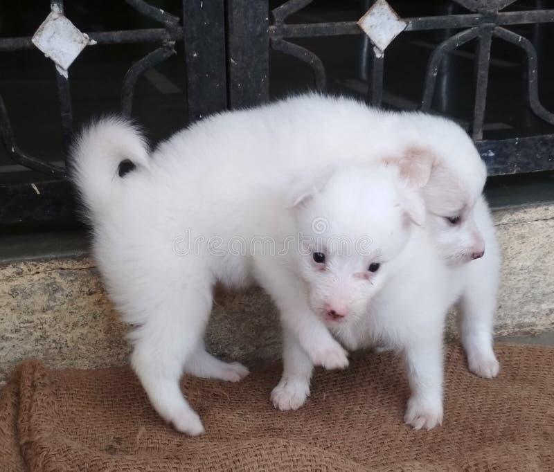 两甜和逗人喜爱的狗piv 免版税库存照片