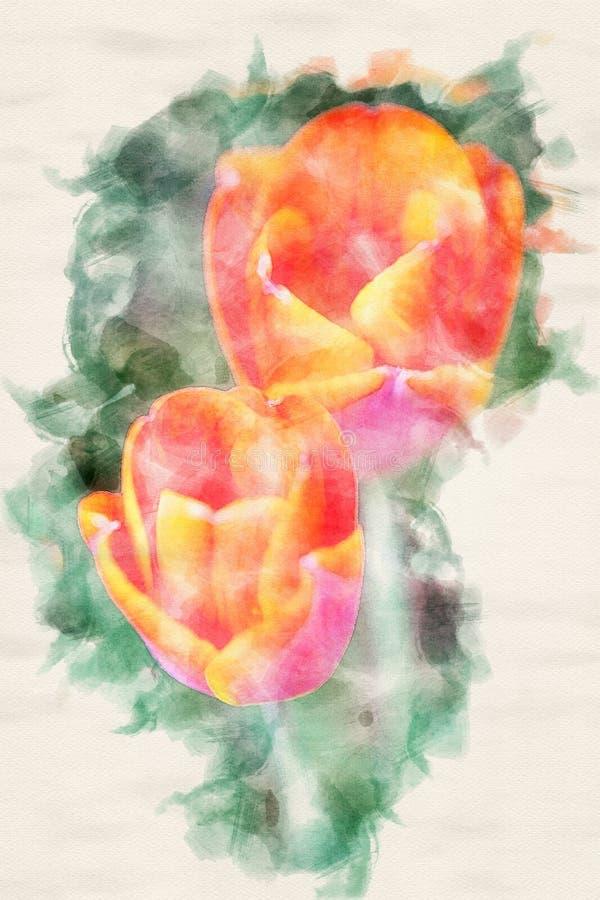 两红色郁金香特写镜头在水彩的 向量例证