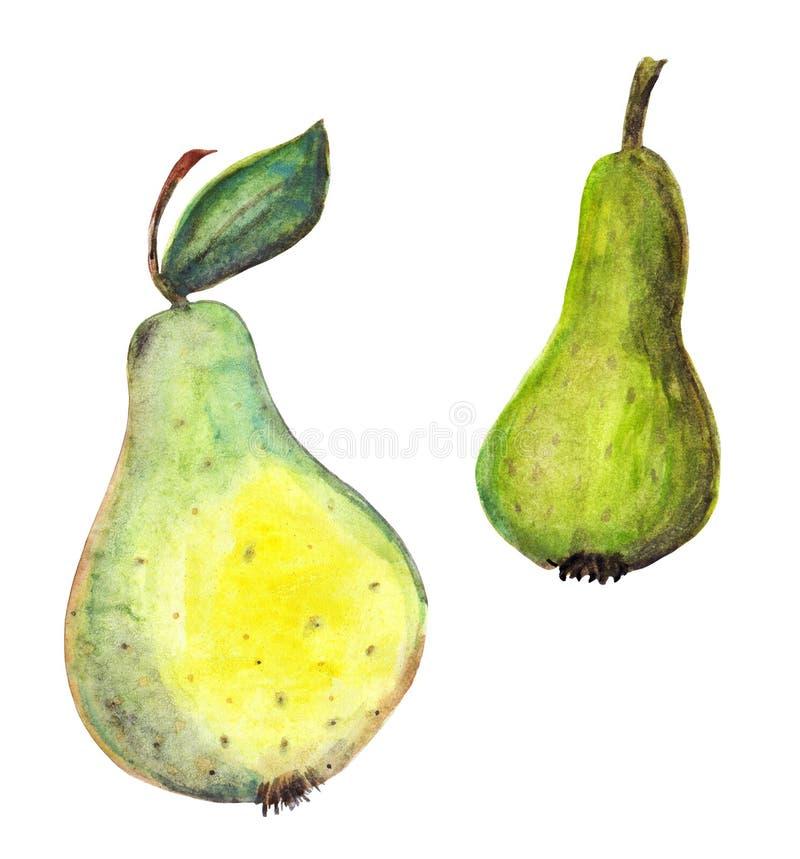 两绿色和黄色梨 向量例证