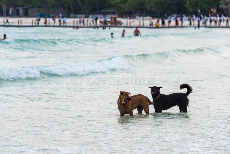 两跑在海滩的狗 狗在海 ?? 免版税库存照片