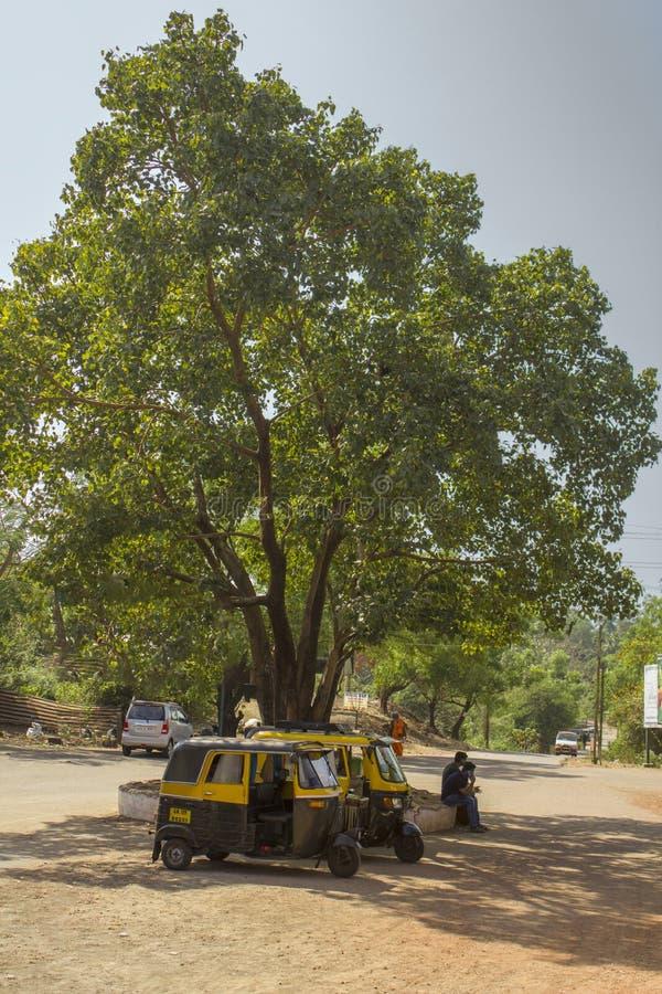 两辆印度黑和黄色moto人力车出租汽车在一棵大绿色树的树荫下停放在a下的 免版税库存图片