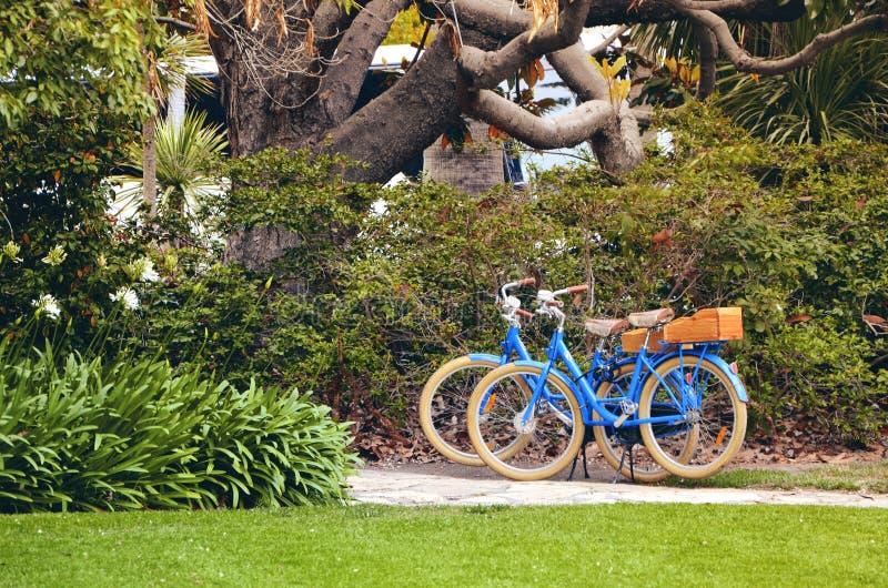 两辆蓝色自行车停放在一棵大树下在庭院里 库存图片