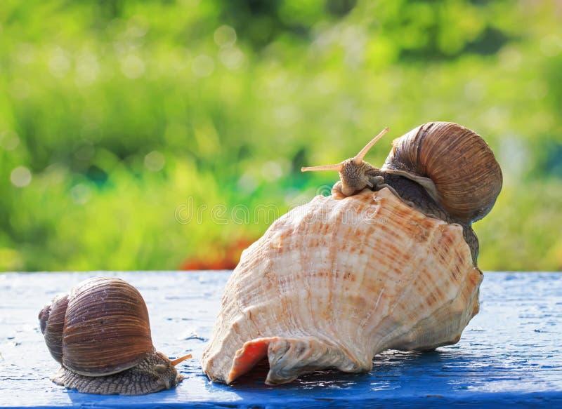 两逗人喜爱的滑稽的蜗牛爬行庆祝乔迁庆宴党我 免版税库存照片