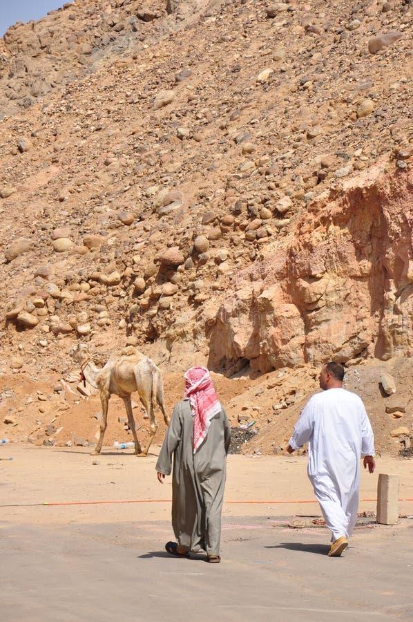 两阿拉伯人和骆驼走 免版税库存照片