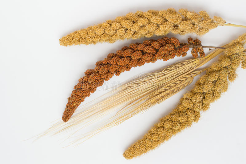 两麦子、两根枝杈黄色小米和一红色小米茎  库存照片