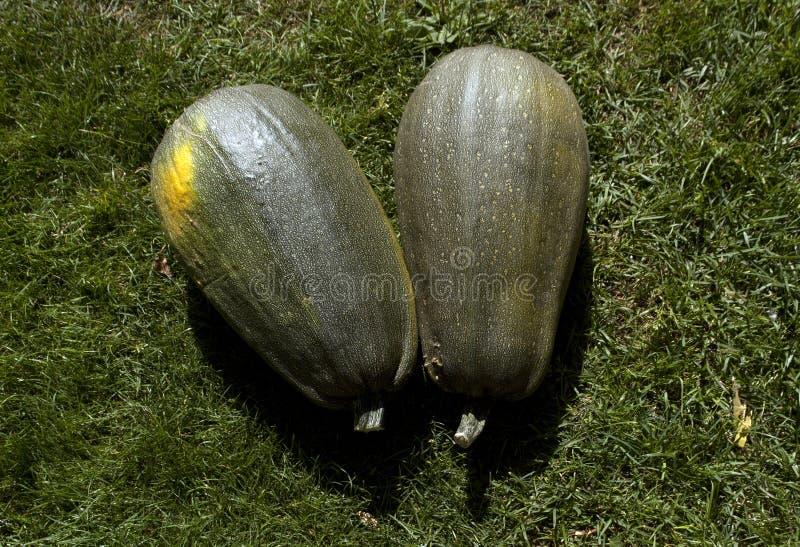 两绿色和黄南瓜 免版税图库摄影