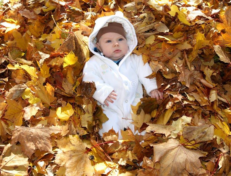 严肃的叶子的婴孩 库存照片