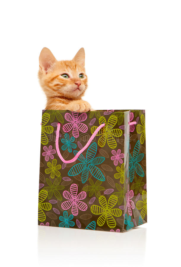 严重坐在开花的绿色,桃红色和蓝色购物袋的迷人的矮小的红色小猫 库存照片
