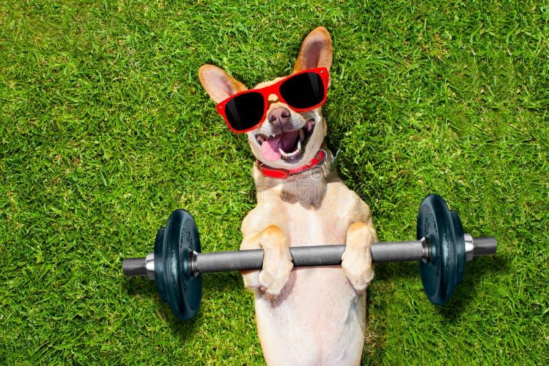 个人教练员体育健身狗 免版税图库摄影
