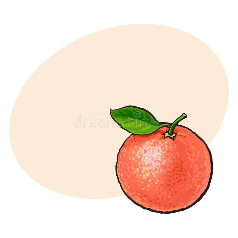 整个发光的成熟粉红色葡萄柚,与叶子的红色桔子 库存例证