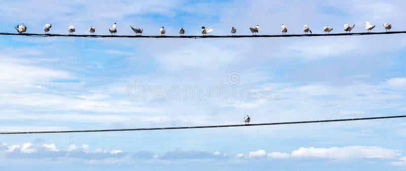 个性标志,认为在箱子,独立思想家概念外面作为一个小组在一根导线的鸽子鸟与一个个体 免版税图库摄影