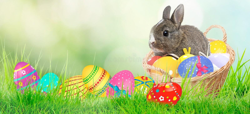 2个所有时段小鸡概念复活节彩蛋开花草被绘的被安置的年轻人 绿草、复活节彩蛋和网横幅背景在一好日子 兔宝宝和鸡 免版税库存照片