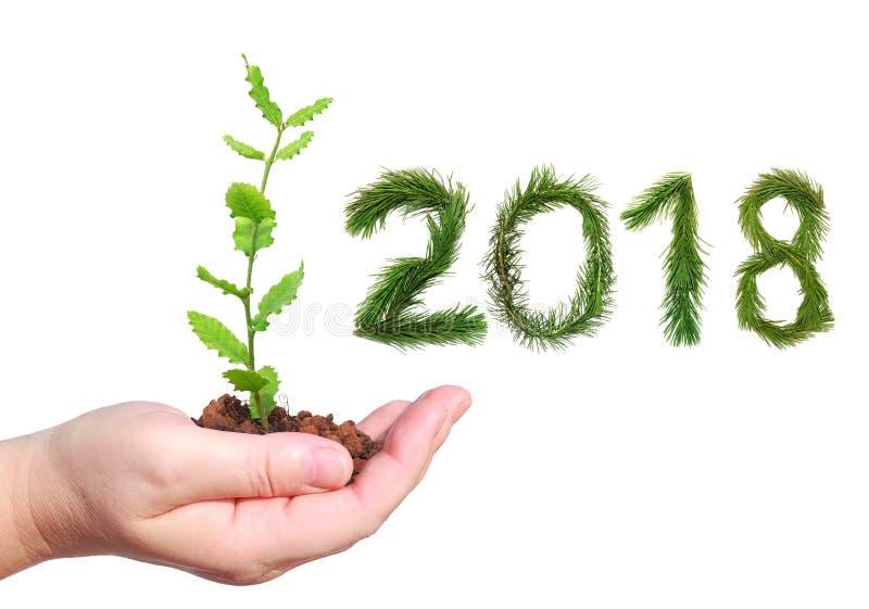 2018个新年 二千十八 拿着年轻绿色幼木的妇女手 信件和数字被做杉树branc 免版税库存照片