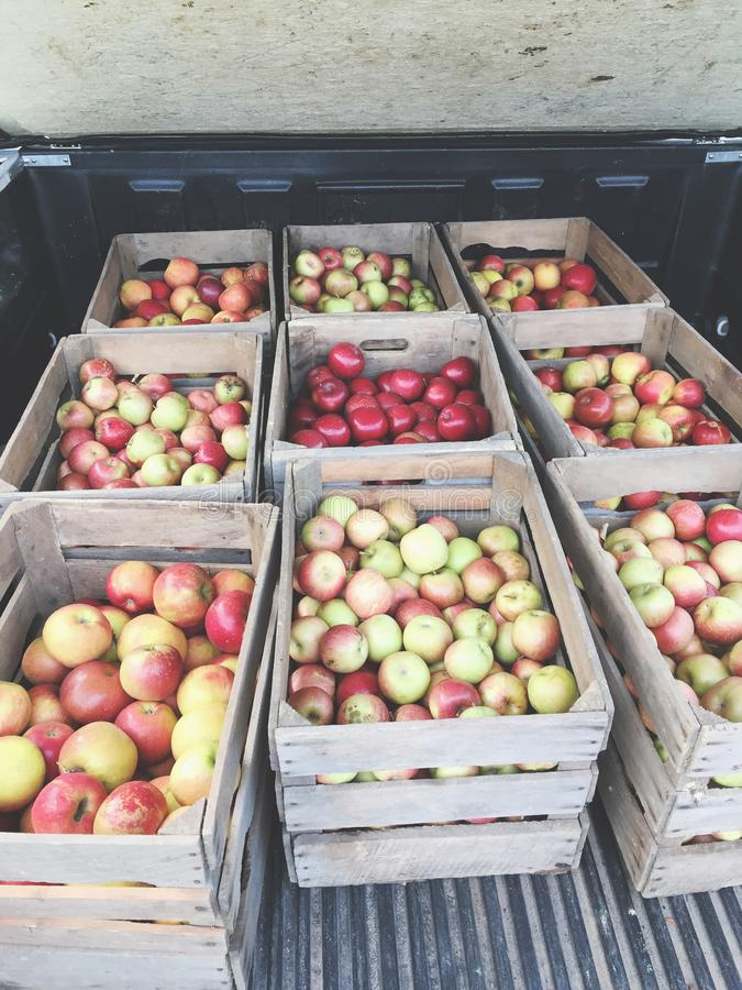 9个条板箱新近地被收获的苹果 免版税图库摄影