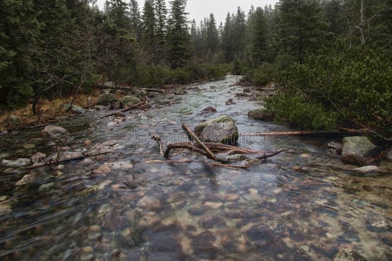 5个湖谷的在Tatra山,波兰山河 免版税库存图片
