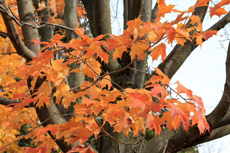 9个秋天颜色 图库摄影