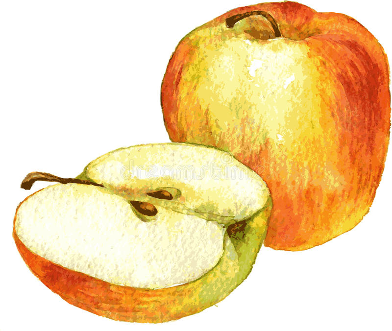 整个苹果和半图画由水彩 库存例证