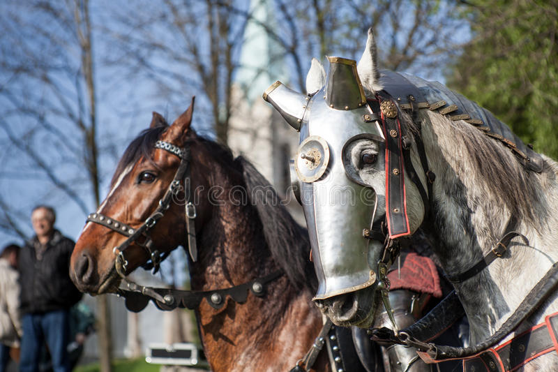 2个骑士比赛 会众的骑士在圆环战斗 公开事件在城市 免版税图库摄影