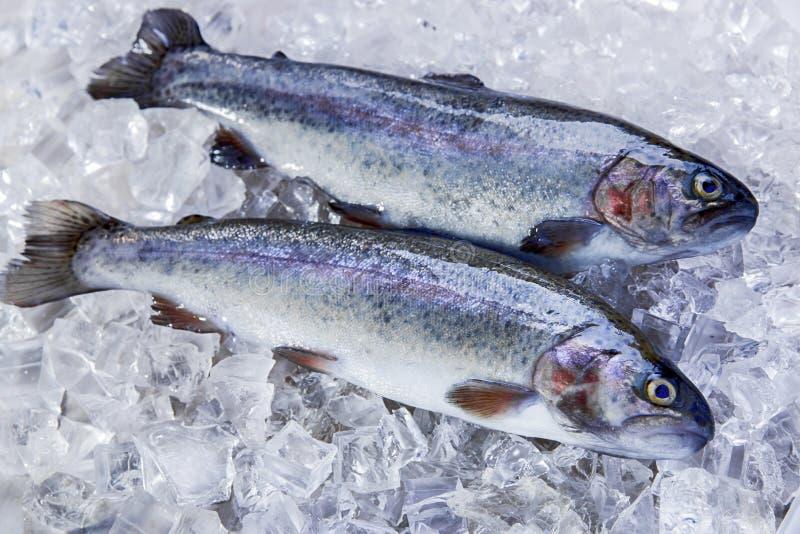 整个鲜鱼鳟鱼 免版税库存图片
