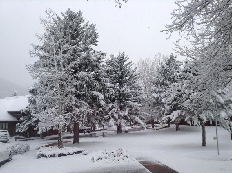 26个综合数字式巨大的mpix全景射击范围多雪的结构树 免版税库存图片