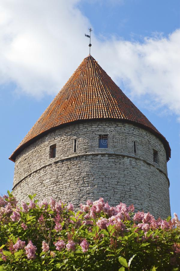 中世纪塔、一部分的城市墙壁和开花的丁香 图库摄影