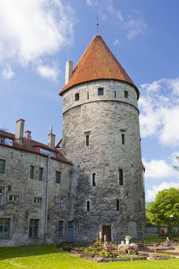 中世纪塔,一部分的城市墙壁,塔林,爱沙尼亚 免版税库存照片