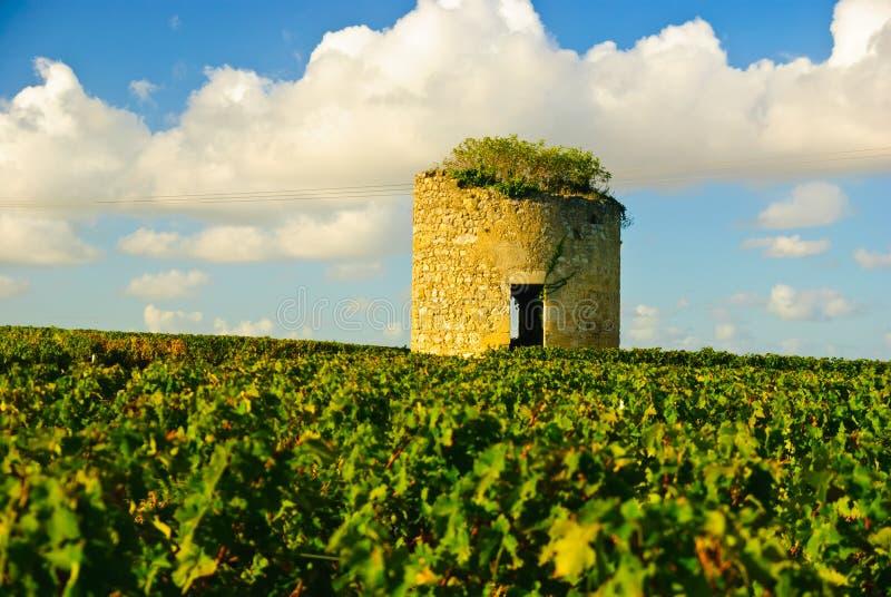 中世纪medoc老被破坏的塔葡萄园 免版税库存图片
