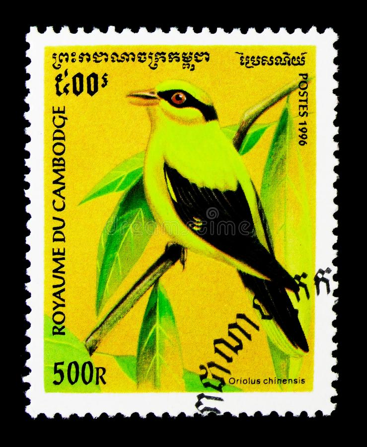 中华黑的naped奥廖拉诺的猎户流星群,鸟serie,大约1996年 免版税库存照片