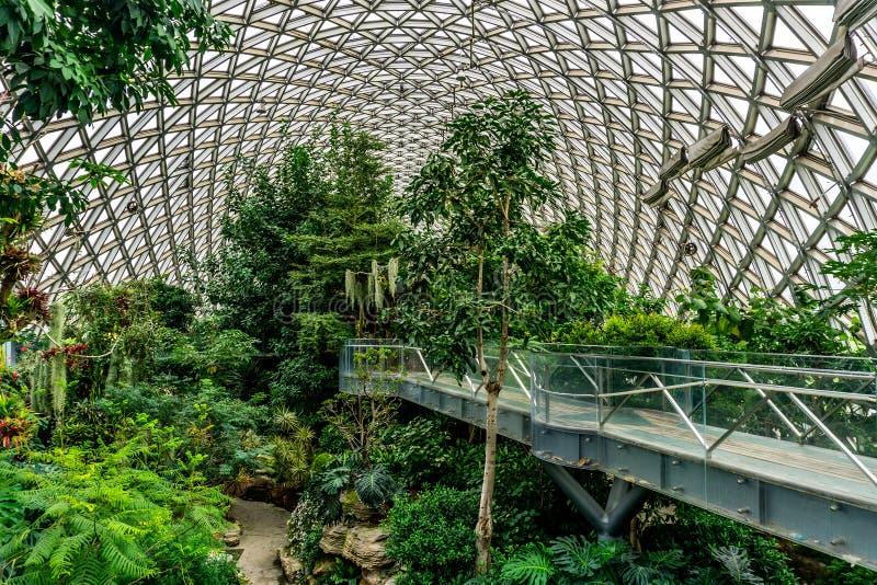 中国上海植物园温室7 库存照片