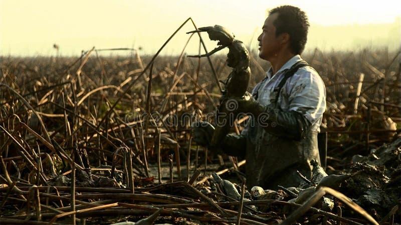 中国人挖掘莲花根 这是在泥沙增长深深的一棵高出产量菜 云南 中国 免版税库存照片