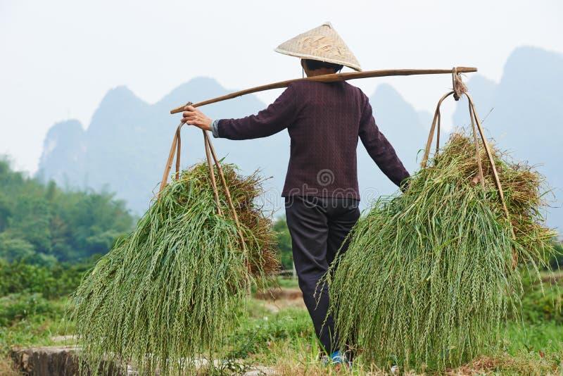 中国农业农厂工人 免版税库存照片