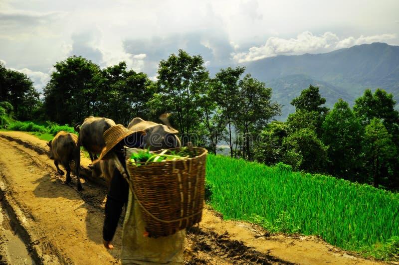 中国南方,云南- 2011年:米大阳台 库存照片