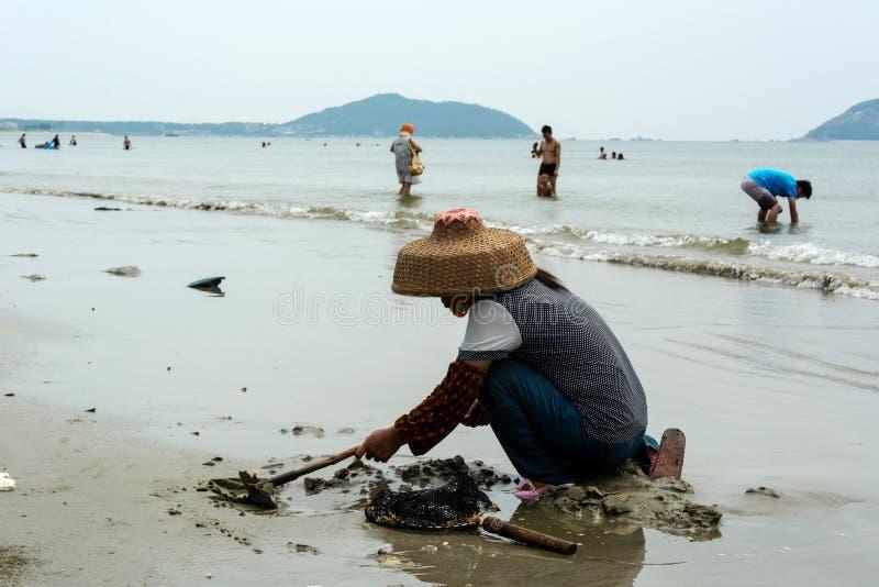 中国妇女开掘的蛤蜊 免版税图库摄影