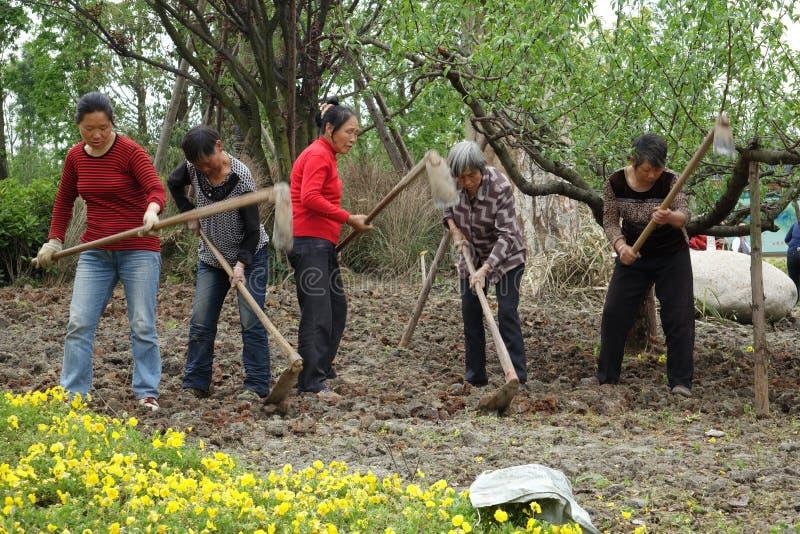 中国妇女耕领域 免版税库存图片
