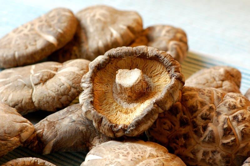 中国干蘑菇 库存图片