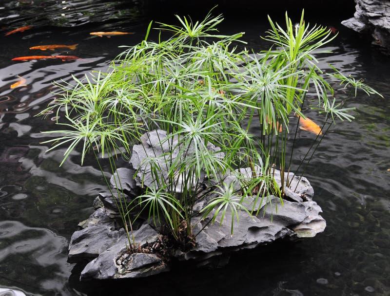 中国庭院池塘样式 免版税库存照片