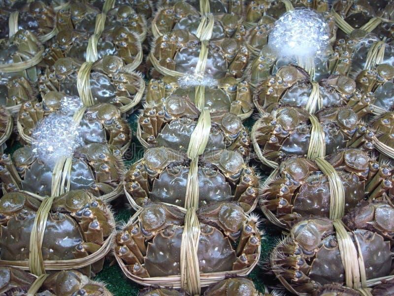 中国手套螃蟹或上海长毛的螃蟹 库存图片