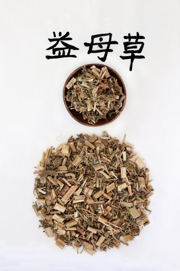 中国益母草草本 免版税库存照片