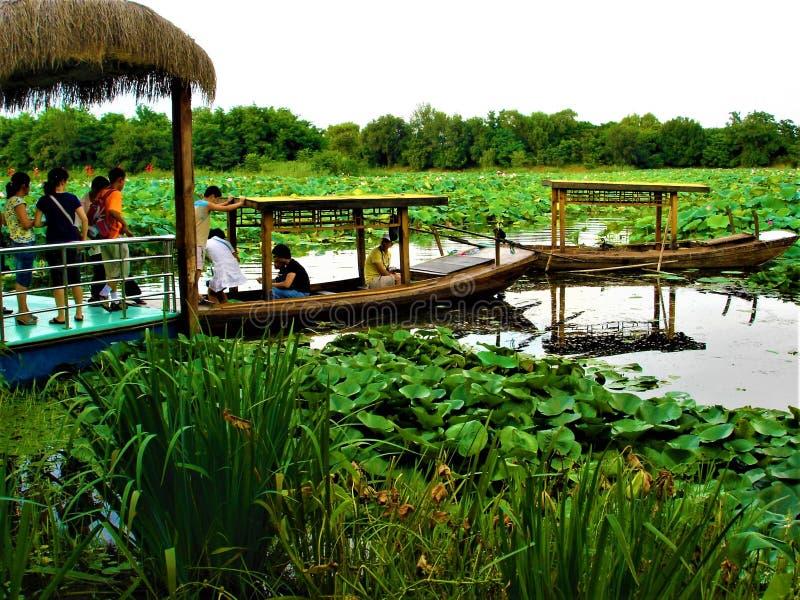 中国绿洲、湖、游人和莲花 库存图片