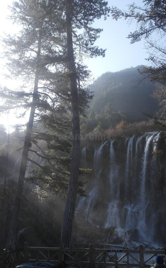 中国美国五针松树播种(松属Armandii)在瀑布旁边的身分 库存照片