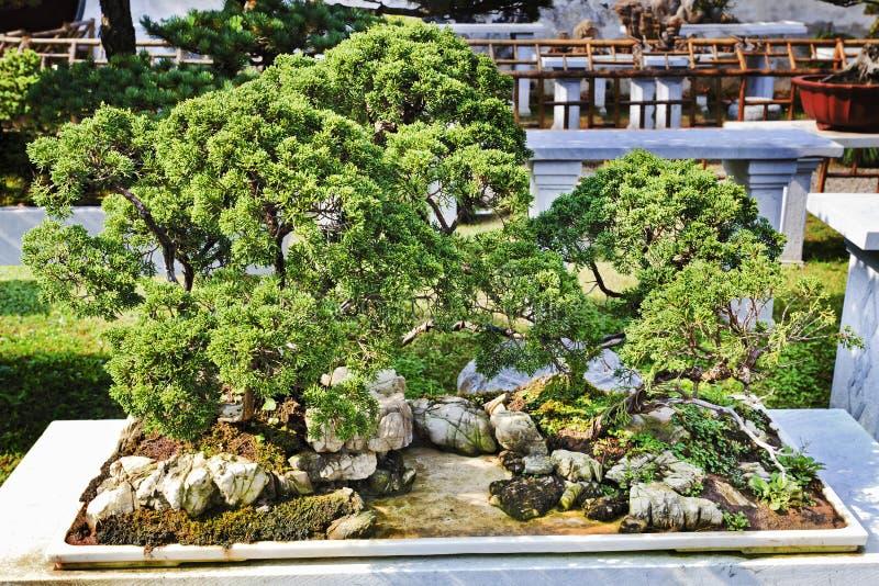 中国苏州盆景绿色树 库存照片