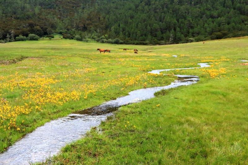 中国` s香格里拉普达措国家公园Bita Seaview区 免版税库存照片