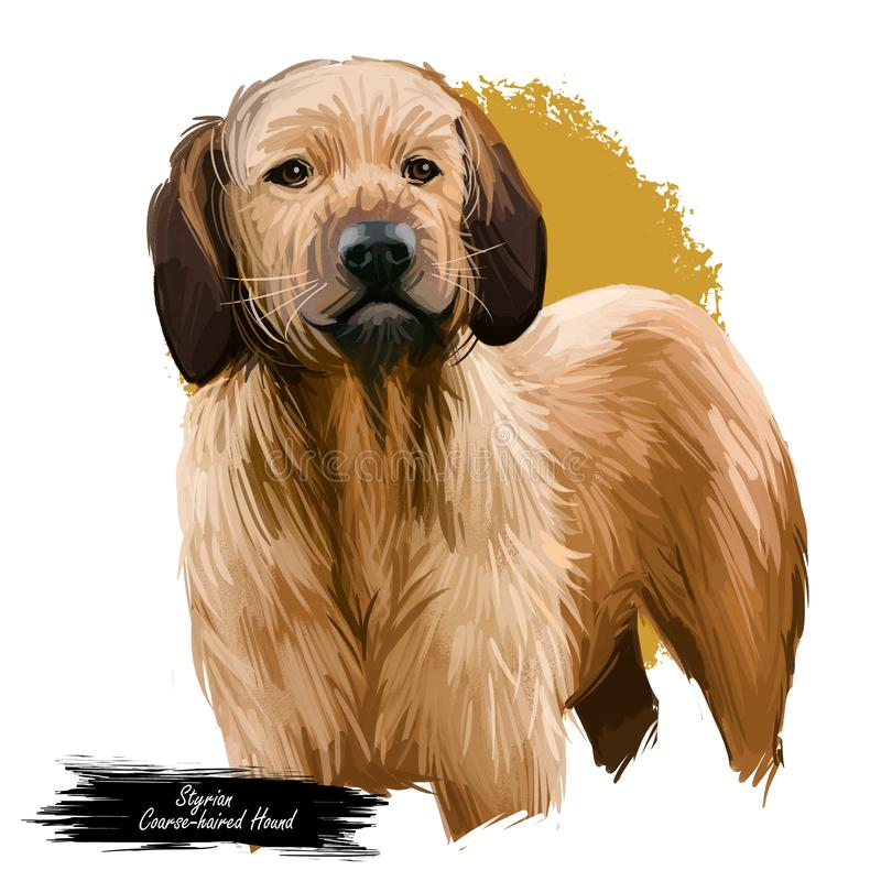 中型猎犬Styrian粗糙头发的猎犬品种  : 动物水彩画象特写镜头隔绝了 库存例证